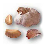 KRATHIAM (Garlic)